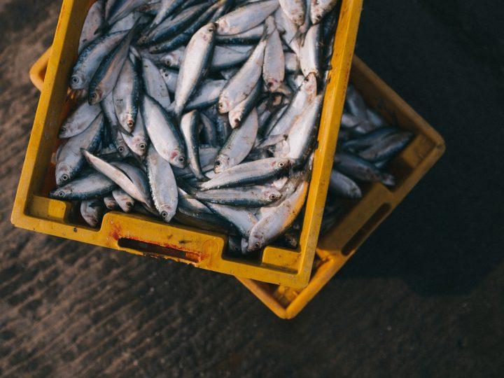Bezpieczne ryby