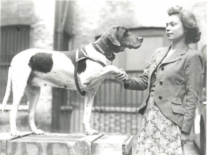Psia ofiarność w latach wojny
